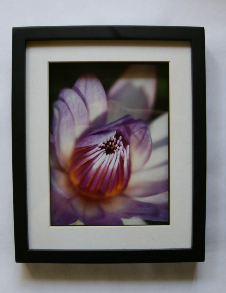 Art - Lily - Framed Print - (Lily 2)